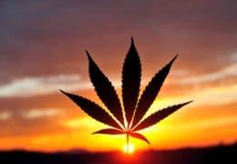 Christians and Cannabis